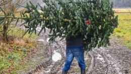 Wohl wieder keine weiße Weihnachten