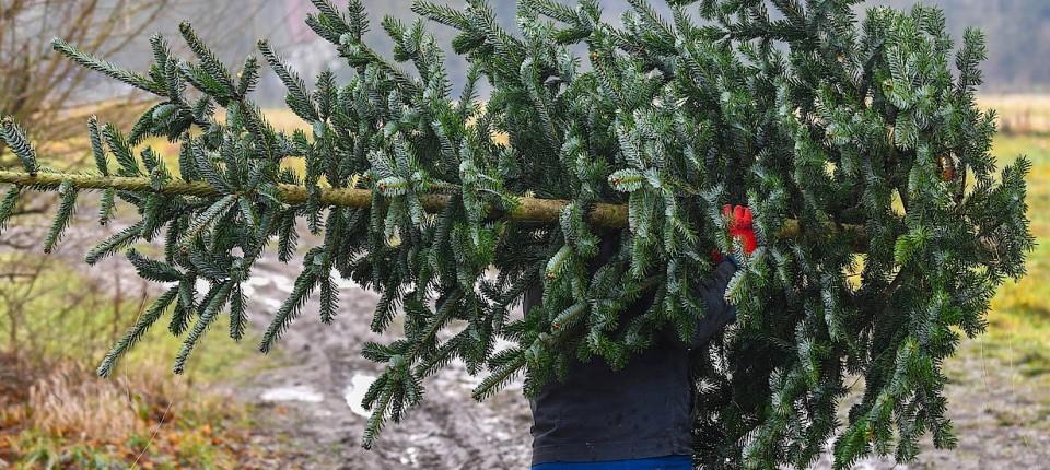 Weiße Weihnachten.Wohl Wieder Keine Weiße Weihnachten