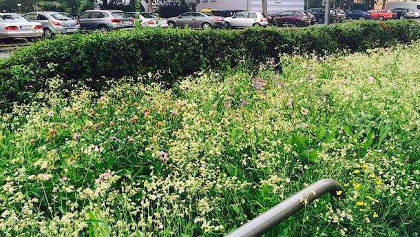 Blühende Wiesen am Straßenrand