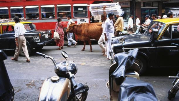 In Indien tobt ein Kampf um die Kuh