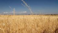 Acker war gestern: Auf diesem formschönen Weizenfeld bei Madrid soll dereinst der Rubel rollen.