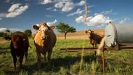 Mehr als nur Kühe und Weide: Bündnis für ländliche Regionen in Hessen. (Symbolbild)