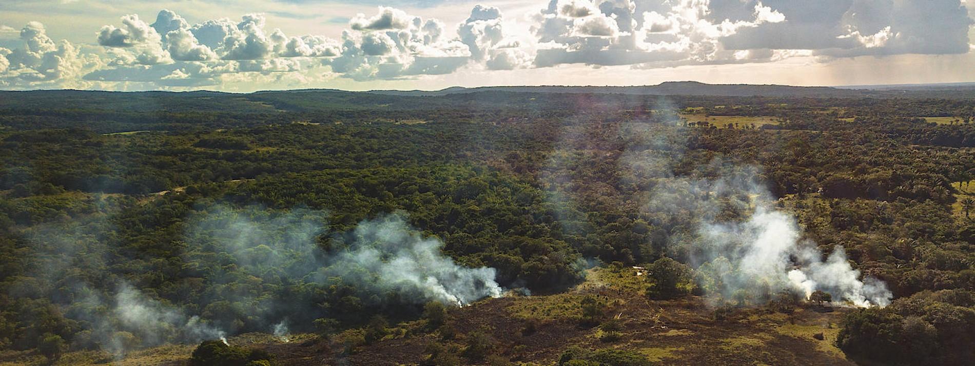 EU für 16 Prozent der Tropenwald-Abholzung verantwortlich