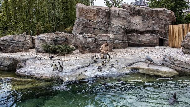 Pinguin-Paradies aus künstlichem Fels