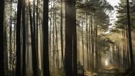 Statistisch betrachtet, ist es für Frauen in den eigenen vier Wänden oder im Bekanntenkreis gefährlicher als allein im Wald. Was aber, wenn doch etwas passiert?