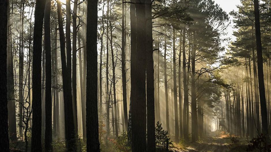 Ab ins Grüne: Bäume binden CO2 - sollte das angerechnet werden?