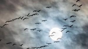 Gefiedertes Schauspiel am Himmel