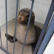 Sammy wartet in einem Käfig auf seine Auswilderung.