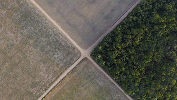 Ausmaß der Regenwald-Abholzung hat deutlich zugenommen