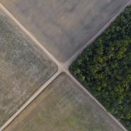 Kahl geschlagen: Ein Stück brasilianischer Regenwald grenzt an Sojafelder.