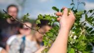Mundräuber sammeln wilde Früchte in der Stadt