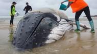 Trauriges Ende eines gestrandeten Wals