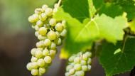 Die Urteile der Kenner über den Weinjahrgang 2018 lesen sich  weniger enthusiastisch.