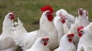 Mehr Huhn war nie