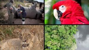 Eine Million Tier- und Pflanzenarten bedroht