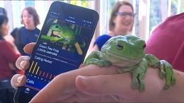 Frosch-Forschung per App