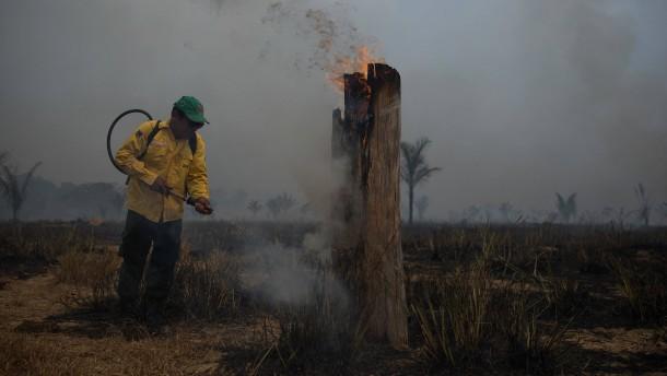 So viele Brände im Amazonaswald wie noch nie