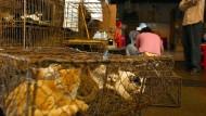 Lange galten Katzen in Teilen Chinas als Spezialität.