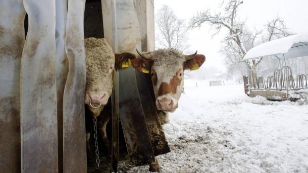 Georg Westenrieder - Der Vorstandsvorsitzende von Bayern Ox, einer Initiative der Münchener Gasttwirte, um  Rindfleisch aus der unmittelbaren Region anzubieten, stellt sich in Gmund den Fragen von Nadine Oberhuber