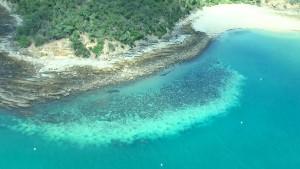 Great Barrier Reef bleicht aus