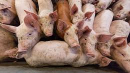 Klimaschützer wettern gegen Nutztiere