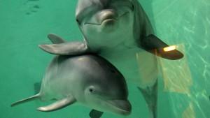 Wieso Menschen und Delphine intelligente Wesen sind