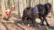 Teamarbeit: zwei Pferde für mehr Zugleistung, zwei Menschen für mehr Sicherheit
