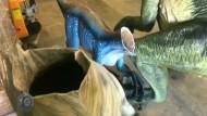 Dinosaurier enthauptet: Polizei sucht Kopf-Diebe