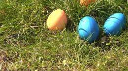 Alles rund ums Ei