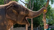 Elefanten-Orakel sagt deutschen Sieg gegen Slowakei voraus
