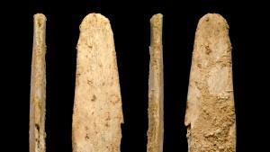 Neandertalers Erbe