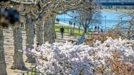 Hier bin ich Mensch, hier darf ich's sein: Spaziergänger  flanieren in  der Frankfurter Frühlingssonne am Ufer des Mains.