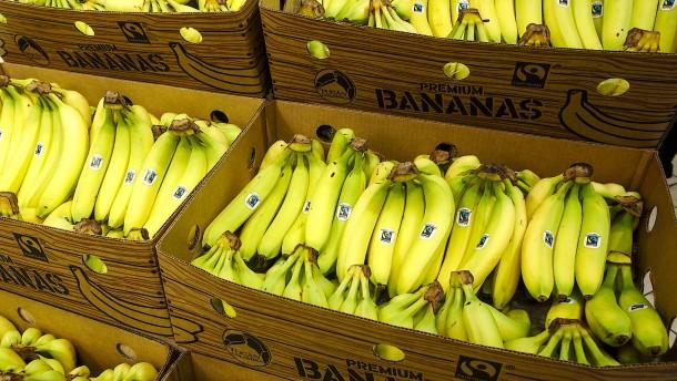 Taugt Biotechnik zur Rettung der Banane?