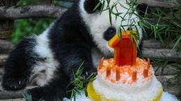 Wenn ein Panda Geburtstag feiert