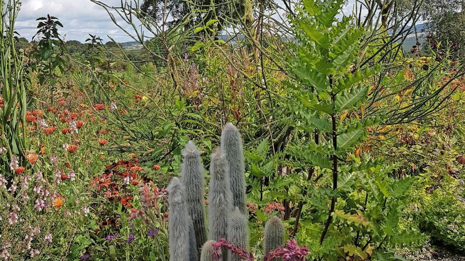 Pflanzen-Mix aus aller Welt –  Hunting Brook bei  Dublin kommt einiges zusammen.