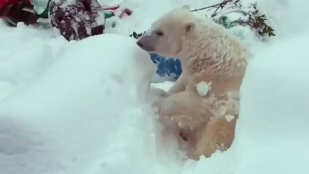 Auch von Zoobewohnern willkommen geheißen - der erste Schnee