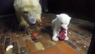 Kleiner Eisbär, großer Hunger