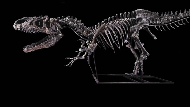 Dino-Skelett findet neuen Besitzer