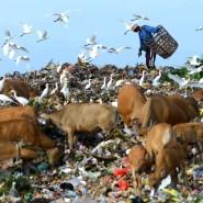 Ein Indonesier sammelt Wertstoffe auf einer Mülldeponie in Denpasar, Bali.