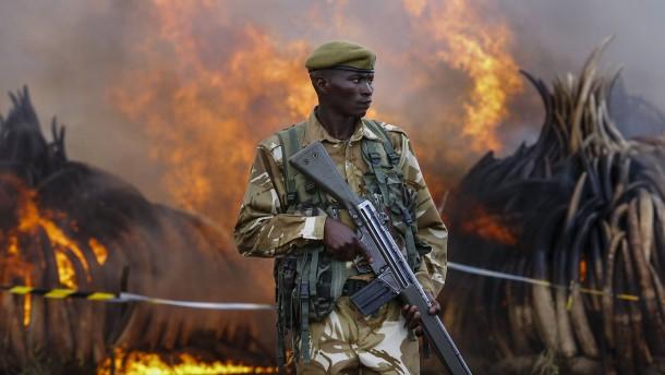 Im Busch ist ein High-Tech-Krieg entbrannt
