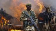 <b>Abschreckung:</b> Beschlagnahmte Elefantenstoßzähne, mehr als 100 Tonnen schwer, werden im Nairobi Nationalpark im April 2016 verbrannt.