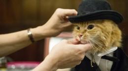 Wer hat die schönste Katze?