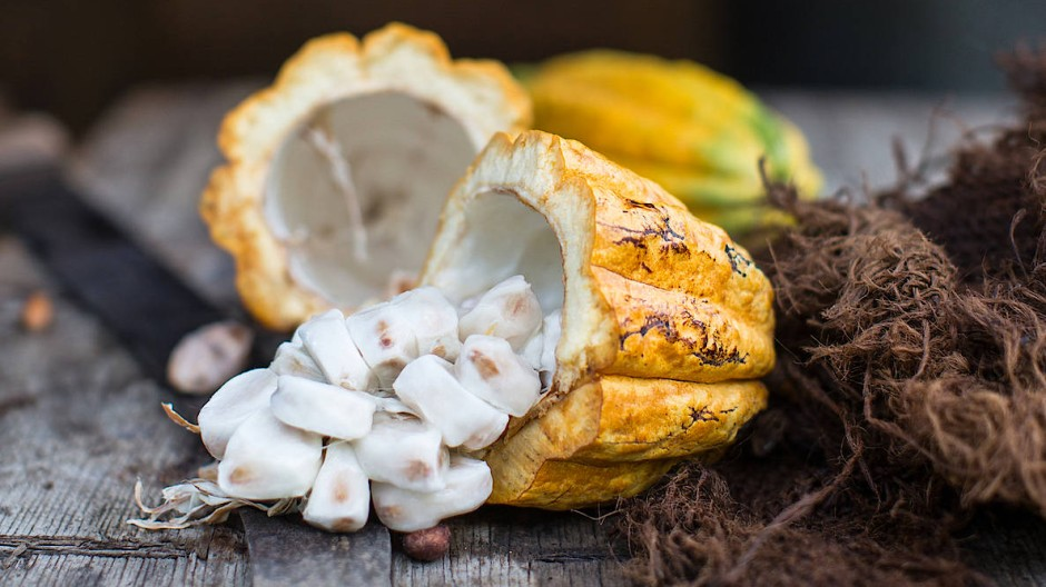 Ein begehrtes Gut: Kakaoschoten