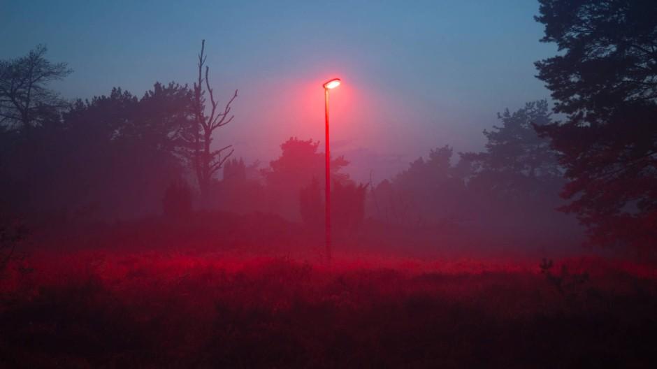 Viele Tiere des Waldes könnten auf Beleuchtung gut und gern verzichten. Oder mindestens auf einen Teil des Spektrums. Rot ist aber auch keine Lösung, fanden niederländische Forscher heraus.