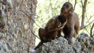 Diese Affen leben in der Steinzeit