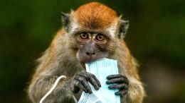 Mund-Nasen-Masken bedrohen die Tierwelt