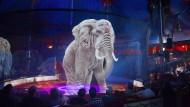 Nicht mehr echte Exoten sind von den Zuschauern im Zirkus Roncalli in der Manege zu bestaunen, sondern ihre Hologramme – hier das eines Elefanten.