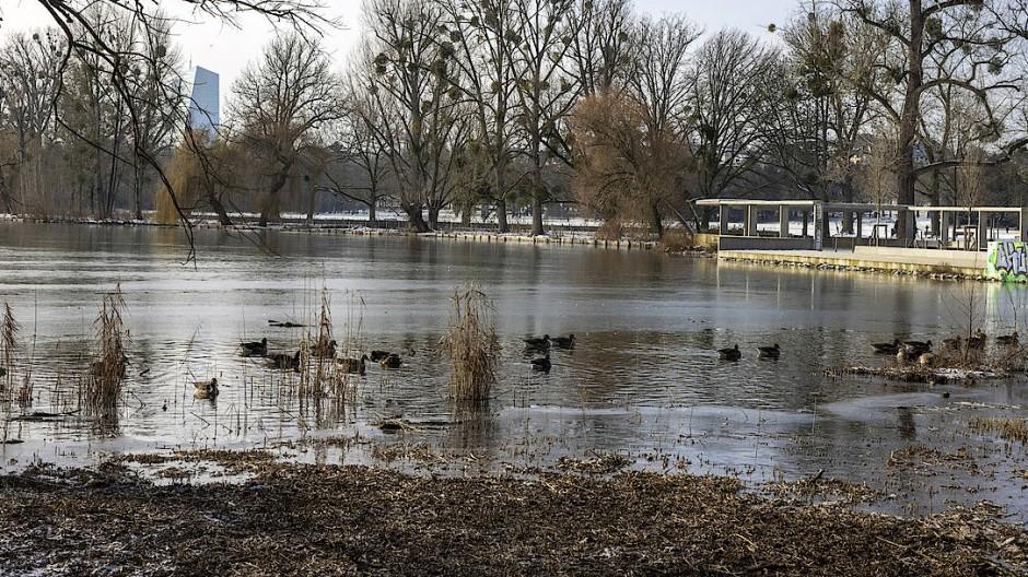 Noch nicht zugefroren: Im Weiher im Ostpark wird noch geschwommen.