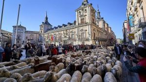 Tausende Schafe ziehen wieder durch Madrid