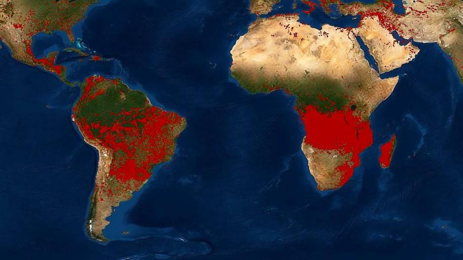 Ein Satellitenbild zeigt die aktiven Waldbrände auf dem Planeten.